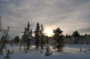 Talvinen maisema. Taustall näkyy himmeästi auringon valo.